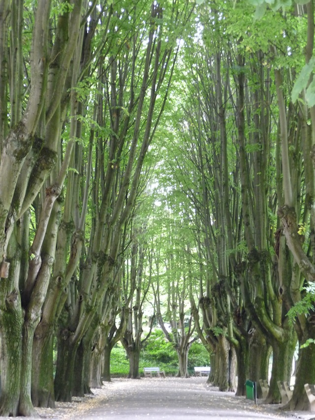 allée des arbres zoo mulhouse