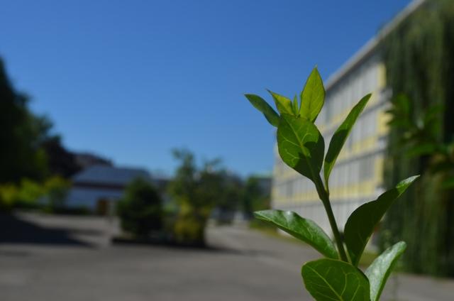 Lycée Albert Schweitzer - © My-Mulhouse.fr