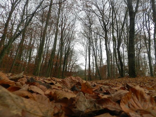 forêt mulhouse