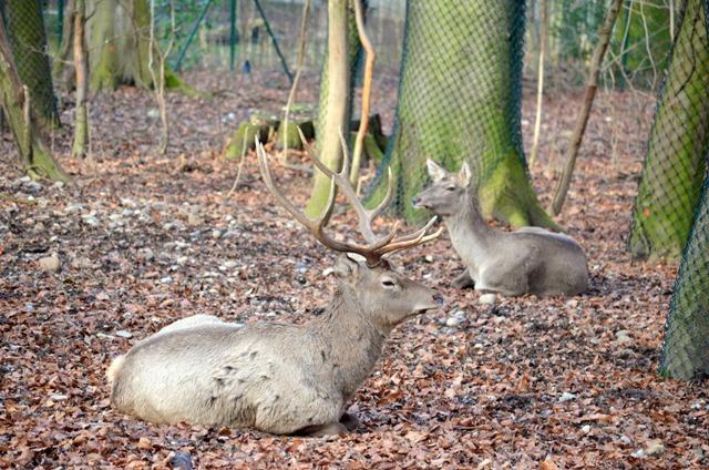parc zoologique botanique mulhouse