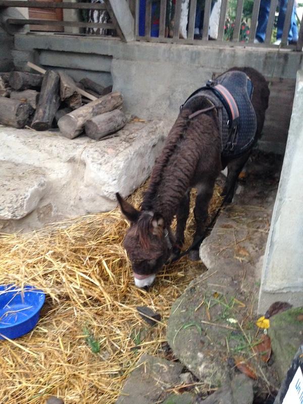 L'âne Gaspard - © My-Mulhouse.fr