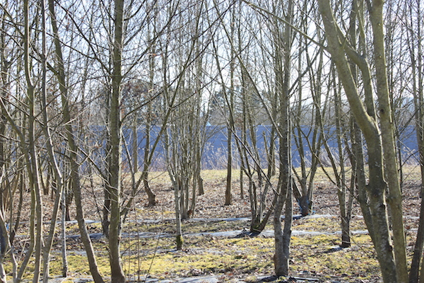 Les arbres du Parc des Collines - © My-Mulhouse.fr