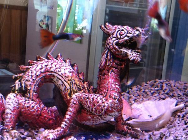 Non, le dragon ne mange pas les petits poissions chez Fan - © My-Mulhouse.fr