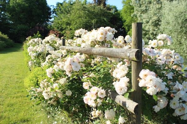 roseraie jardins du temps