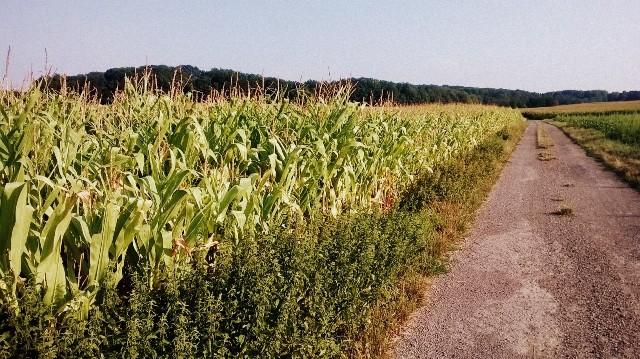 Balade dans les champs, qu'on peut aussi faire à vélo d'ailleurs - © My-Mulhouse.fr