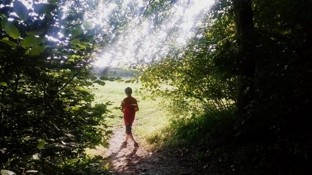 En sortant de la forêt - © My-Mulhouse.fr