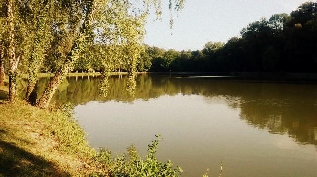 L'étang Rieweiher - © My-Mulhouse.fr
