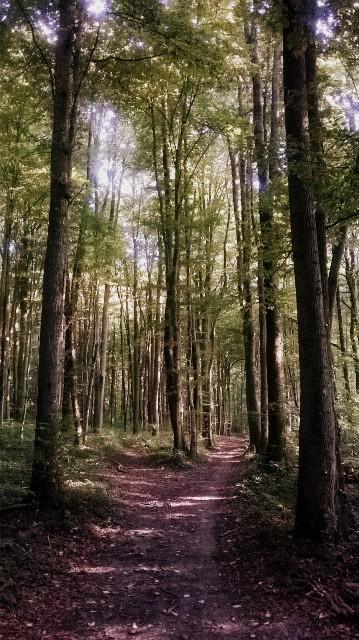 La forêt - © My-Mulhouse.fr
