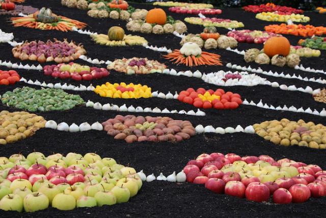 Un patchwork de fuits et de légumes - © My-Mulhouse.fr