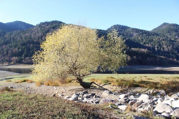arbre lac