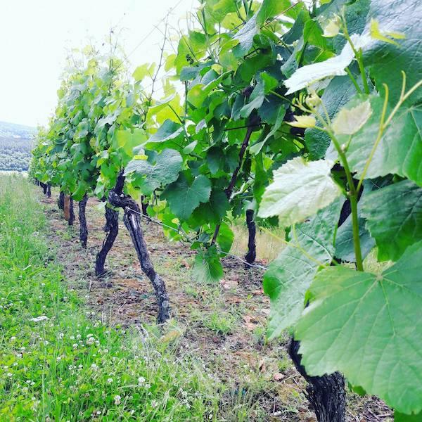 vigne balade vosges alsace