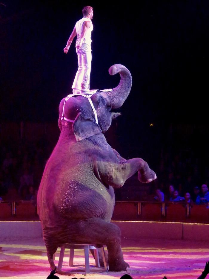 Les éléphants : un numéro toujours très apprécié ! - © Cirque d'Hiver Bouglione