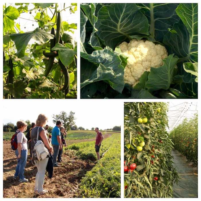 Des beaux légumes, et les explications de Matthieu - © My-Mulhouse.fr