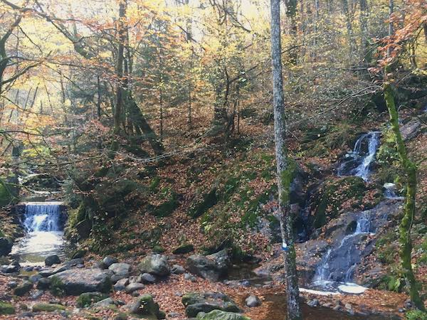 Beaucoup de cours d'eau et des cascades pendant la balade - © My-Mulhouse